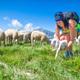 A new born lamb - PhotoDune Item for Sale