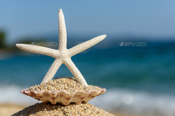 Seashells on the sand by the sea on a sunny day - Stock Photo - Images