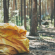 Big garbage bag in the woods. Picking up trash in the forest - PhotoDune Item for Sale