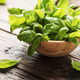Green fresh basil - PhotoDune Item for Sale
