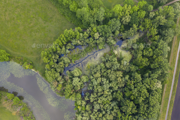 Morava river marshlands from top down view - Stock Photo - Images