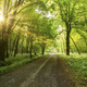 Forest road with morning sun peeking through the branches - PhotoDune Item for Sale