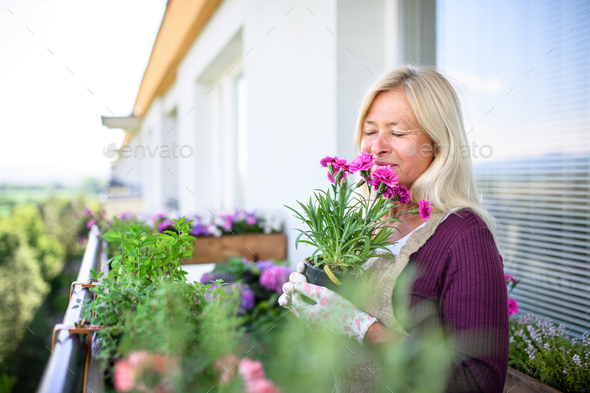 Senior woman gardening on balcony in summer, holding potted plant - Stock Photo - Images