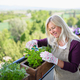 Senior woman gardening on balcony in summer, cutting herbs - PhotoDune Item for Sale