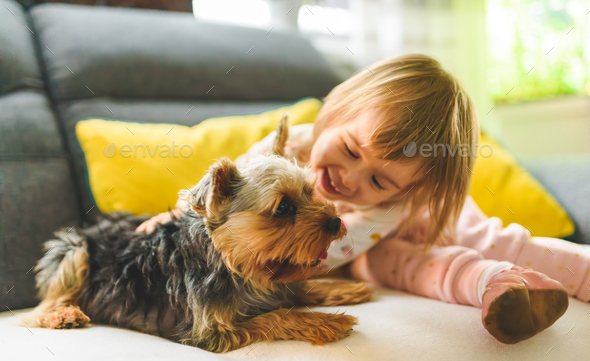 Child with a york dog ona a sofa - Stock Photo - Images