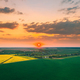 Aerial View Of Green Meadow And Field With Blooming Canola Yellow Flowers. Top View Of Blossom Plant - PhotoDune Item for Sale