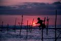 Traditional stilt fisherman in Sri Lanka - PhotoDune Item for Sale