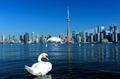 Toronto city skyline, Ontario, Canada - PhotoDune Item for Sale