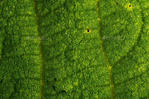 Background of the green leaf with  brown spots of pest bite - Stock Photo - Images