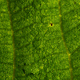 Background of the green leaf with  brown spots of pest bite - PhotoDune Item for Sale