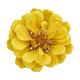 Beautiful yellow flower zinnia isolated. - PhotoDune Item for Sale