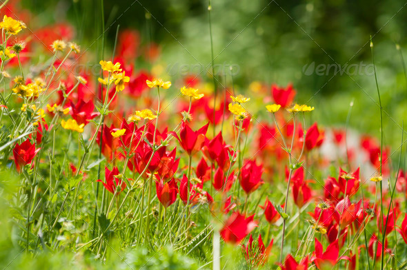 Flower field - Stock Photo - Images