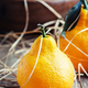 Funny fresh tangerines in the shape of pears - PhotoDune Item for Sale