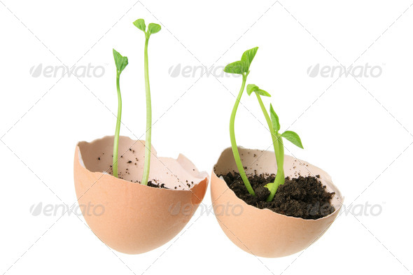 Young Plants in Egg Shells - Stock Photo - Images
