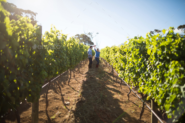 Distant view of couple dancing amidst plants at vineyard - Stock Photo - Images