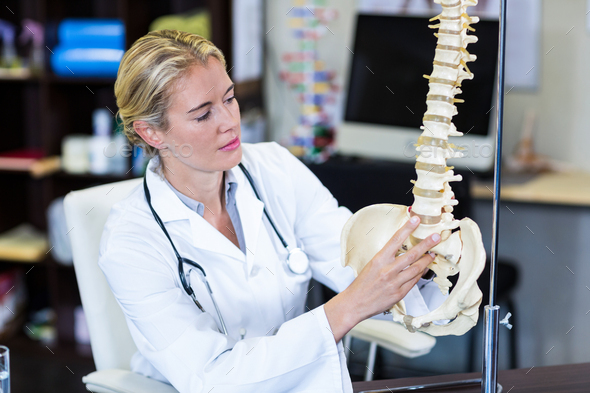 Physiotherapist looking at spine model - Stock Photo - Images