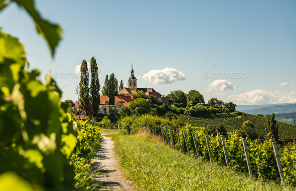 Vineyard on Austrian countryside with a church in the background. - Stock Photo - Images