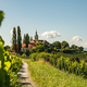 Vineyard on Austrian countryside with a church in the background. - PhotoDune Item for Sale