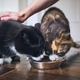 Cute cats eating from bowl - PhotoDune Item for Sale