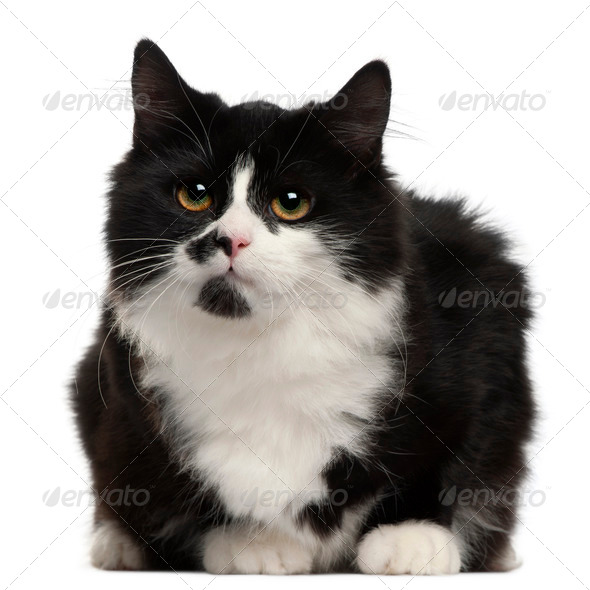 Black and white cat, 5 months old, sitting in front of white background - Stock Photo - Images