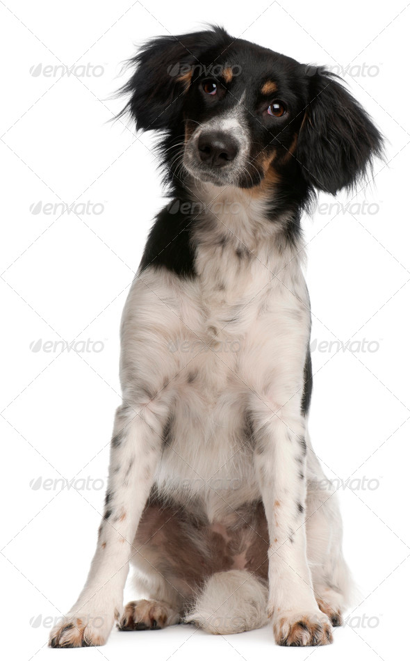 Mixed-breed dog, 9 months old, sitting in front of white background - Stock Photo - Images