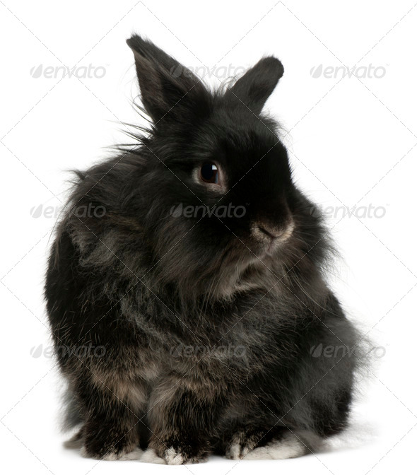 Rabbit, 5 years old, in front of white background - Stock Photo - Images