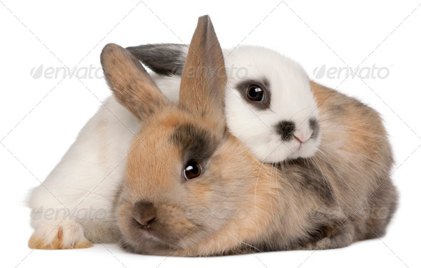 Two rabbits in front of white background - Stock Photo - Images