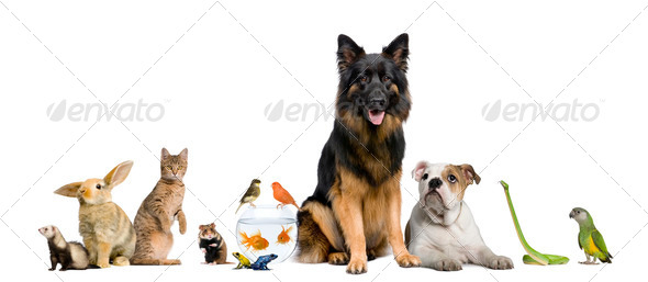 Group of pets together in front of white background - Stock Photo - Images