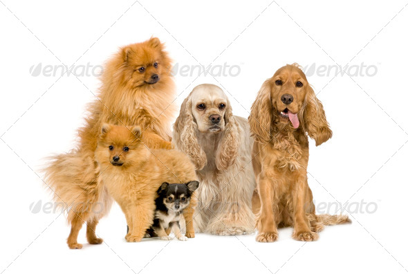 Group of dog - Stock Photo - Images