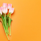Pink tulips over orange background - PhotoDune Item for Sale