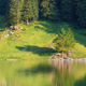 A forest and a lake with reflections. Summer landscape in Switzerland - PhotoDune Item for Sale