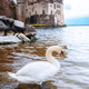Swan against old castle - PhotoDune Item for Sale