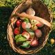 Fresh apples - PhotoDune Item for Sale