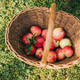 Fresh apples - PhotoDune Item for Sale