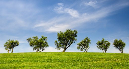 Trees & Foliage