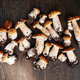 Fresh Wild Porcini on the Wooden Table - PhotoDune Item for Sale