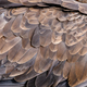 Closeup texture of brown eagle - PhotoDune Item for Sale