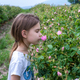 Girl in a rose field - PhotoDune Item for Sale