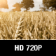 Wheat Crop Field Blowing in the Wind - VideoHive Item for Sale
