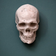 Replica of a human skull hanging on a wall - PhotoDune Item for Sale