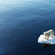 Polar bear on ice floe. Melting iceberg and global warming. - PhotoDune Item for Sale