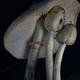 Close-up view of white mushroom in the dark - PhotoDune Item for Sale