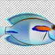 Cartoon Tang Fish Version 05 - VideoHive Item for Sale