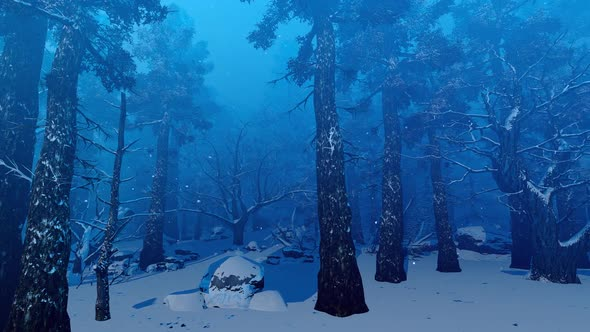 dark winter forest by animix videohive