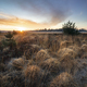 golden sunrise over marsh in spring - PhotoDune Item for Sale