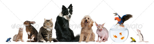 Group of pets sitting in front of white background - Stock Photo - Images