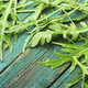 Fresh arugula or rucola leaves - PhotoDune Item for Sale