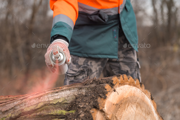 Forestry technician marking tree trunk with red aerosol can paint - Stock Photo - Images