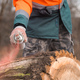 Forestry technician marking tree trunk with red aerosol can paint - PhotoDune Item for Sale
