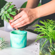 Woman is planting succulent plant in the new planter pot - PhotoDune Item for Sale